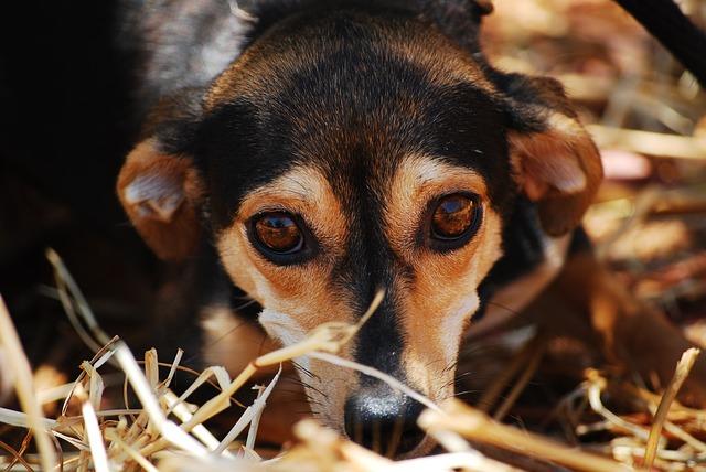 devenir ostéopathe canin