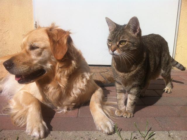 Sociabilisation du chien et du chat