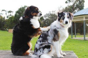 Osthéopathie pour chiens