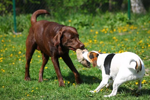 Jeux de chiens au parc canin