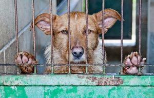 Adopter un chien dans le 06