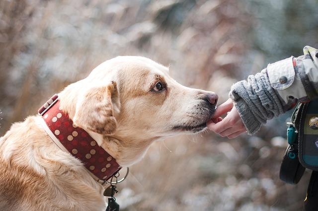 Educateur pour chiens