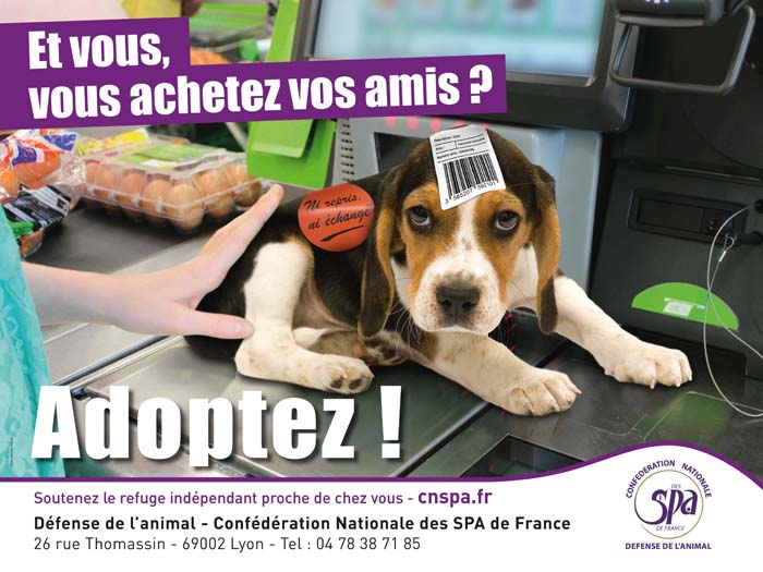Campagne SPA chiot/chien