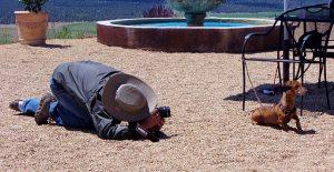 Photographe canin