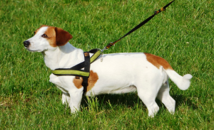 Dog sitter 06