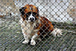 Adopter un chien de refuge