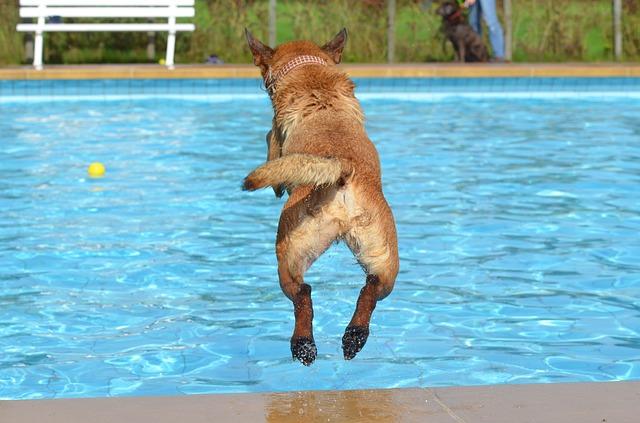 baignade chien piscine