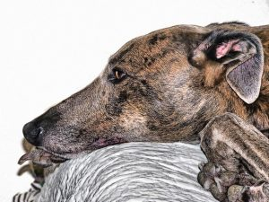Sophrologie canine