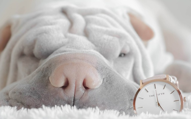 Horaires de l'éducateur canin