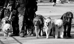 The Walking Dogs