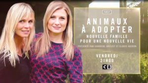 Animaux à adopter C8